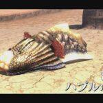 【MHXX】#11☆モンハンライズ発売までに、どこまで上達するか?『ハプルボッカ』☆モンスターハンター・ダブルクロス☆